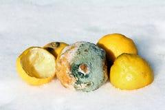 Bedorven citroenen Royalty-vrije Stock Afbeeldingen