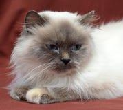 Bedorven Pussy 1 Royalty-vrije Stock Afbeelding