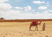 Bedouin Stock Photos
