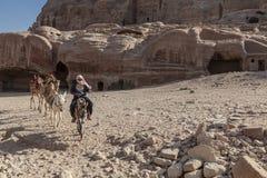 Bedouin berijdend een ezel stock afbeelding