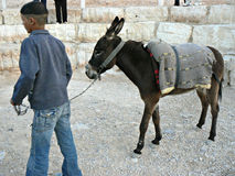 Bedouin boy and donkey Royalty Free Stock Photography
