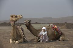 Bedouin boy with his camels. AL Safen, Oman, 27th April 2018: Bedouin boy with his camels in Omani countryside Royalty Free Stock Photo
