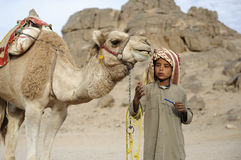 Bedouin boy. HURGHADA - JAN 30: Bedouin boy pulling a camel in Sahara desert.Jan 30,2013 in Hurghada,Egypt royalty free stock photos