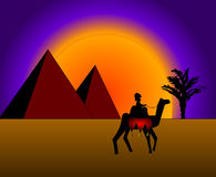 Bedouin on camel Stock Images