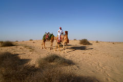 Bedouin on Camel Royalty Free Stock Images