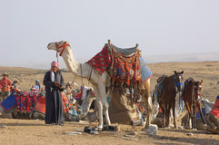 Bedouin and camel. Egypt. 2010. Bedouin with camel in desert invites to safari Stock Photography