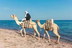 Bedouin on a camel Stock Photos