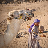 Bedouin with camel in the desert Stock Image