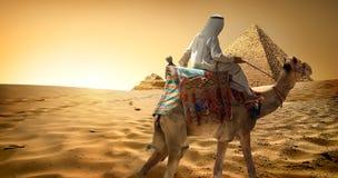 Bedouin on camel in desert. Bedouin on camel in sand desert near pyramids royalty free stock image