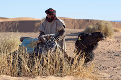 Bedouin with camel, Morocco Stock Photography