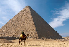 Bedouin on camel near of great egypt pyramid Stock Photography