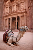 Bedouin Camel at Petra, Jordan. A Bedouin's camel rests in front of the famous treasury at the lost city of Petra in Jordan - one of the seven modern wonders of Royalty Free Stock Images