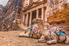 Bedouin camel rests near the treasury Al Khazneh Royalty Free Stock Images