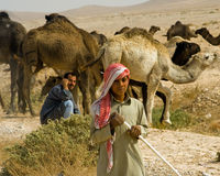 Bedouin camel train, Syria Stock Photo