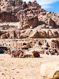 Bedouin camels in ancient Petra town Royalty Free Stock Image