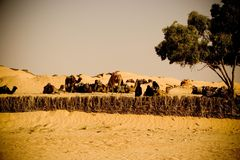 Bedouin camels caravan Royalty Free Stock Photos