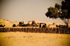Bedouin camels caravan. In the Sahara desert royalty free stock photos
