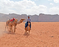 Bedouin Camels. Wadi Rum, Jordan - May 25, 2015: Local Bedouin boy bringing his camels out, trying to sell rides to the tourists stock photography