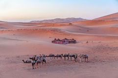 Bedouin camp in the Sahara desert Royalty Free Stock Photos