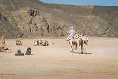 Bedouin come back home Stock Image