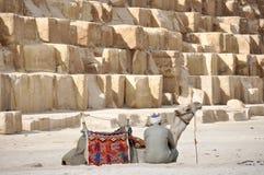 Bedouin door de kameel dichtbij de piramides van Egypte Royalty-vrije Stock Fotografie