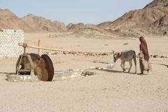 Bedouin girl with donkey working a water wheel royalty free stock image