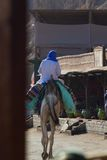 Bedouin on his camel, Blue Hole, Dahab Royalty Free Stock Photo
