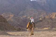 Bedouin on his camel, Blue Hole, Dahab. A bedouin on his camel t the end of the day near the Blue Hole, a wonderful diving resort on the Red Sea near Dahab Stock Photography