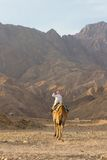 Bedouin on his camel, Sinai, Dahab. A bedouin on his camel at the end of the day near the Blue Hole, a wonderful diving resort on the Red Sea near Dahab, Sinai Royalty Free Stock Photography