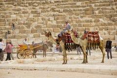 Bedouin jong geitje Stock Afbeelding
