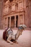 Bedouin Kameel bij Petra, Jordanië Royalty-vrije Stock Afbeeldingen