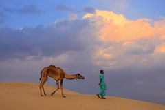 Bedouin leading his camel in Thar desert near Jaisalmer, India Royalty Free Stock Image