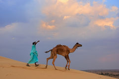 Bedouin leading his camel in Thar desert near Jaisalmer, India Stock Photography