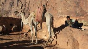 Bedouin leven. Zet Sinai op. Egypte stock video