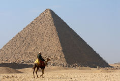 Bedouin no camelo próximo da grande pirâmide de Egipto Foto de Stock