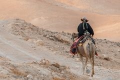 Bedouin riding a camel Royalty Free Stock Image