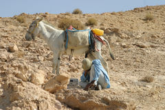 Bedouin shepherd & his donkey. A day at work stock photos