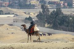 Bedouin sitting on a camel and watching the construction site in the desert. stock image