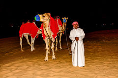 Bedouin standing in front of his Camel in the arabian desert Stock Photos
