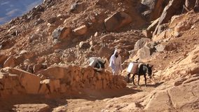 Bedouin and two donkeys. Mount Sinai. Egypt. EGYPT, SINAI, SEPTEMBER 20, 2010: Bedouin and two donkeys on Moses Mountain. Mount Sinai that is the traditional and stock video footage