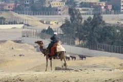 Bedouin zitting op een kameel en het letten van de op bouwwerf in de woestijn stock afbeelding