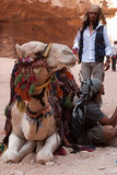 Bedouins and Camel stock image