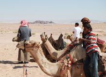 Bedouins with camels in the desert Royalty Free Stock Photography