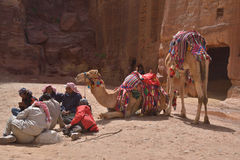 Bedouins with camels in Petra Stock Photos
