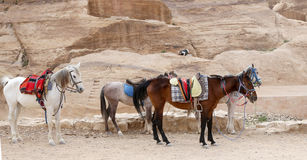 Bedouins horses in Petra,  Jordan Royalty Free Stock Photo