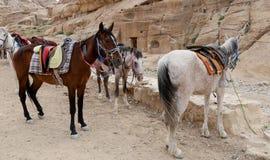 Bedouins horses in Petra,  Jordan Royalty Free Stock Photos