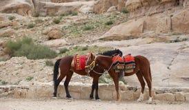 Bedouins horses in Petra,  Jordan Royalty Free Stock Images