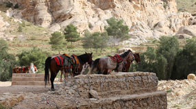 Bedouins horses in Petra,  Jordan Stock Images