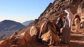Bedouins met kamelen. Zet Sinai op. Egypte stock footage