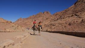 Bedouins op kamelen dichtbij Moses Mountain. Sinai Schiereiland, Egypte stock footage